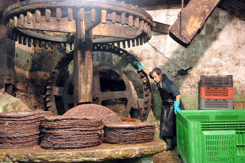 Inside the olive mill, a man prepares the wheel to begin its work.